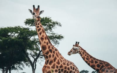 7 Wildlife Photography Tips: How to Take the Best Pictures of Your African Safari