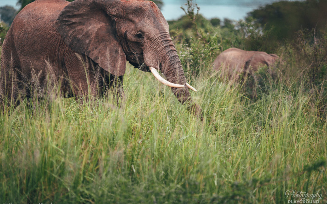 How to Take the Best Pictures of Your African Safari
