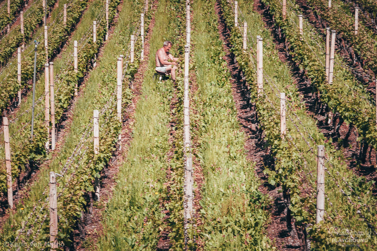 principles of composition in photography, photo composition examples, composition techniques, composition rules, leading lines | Copyright Karin van Mierlo for Photography Playground. Photo: A man working in a vineyard in Alto Adige, Italy.