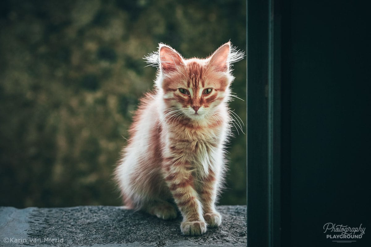 sharp focus, how to get sharp photos | Photo: Kitten in Sicily, Italy ©Karin van Mierlo, Photography Playground