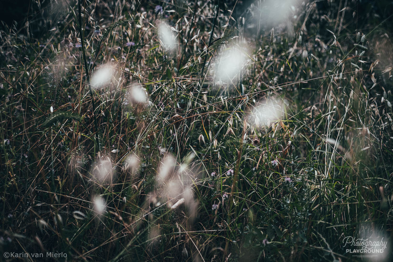 mindful photography tips, mindful photography ideas   Photo: ©Karin van Mierlo, Photography Playground ~ Grass, Parque Florestal de Monsanto, Lisbon, Portugal