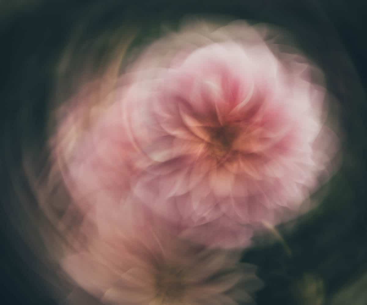 blur in photography, intentional blur photography, lensbaby, bokeh, intentional camera movement | Photography Playground, Photo: Circular ICM of a dahlia (one frame) - - Photographer Stacey Hill