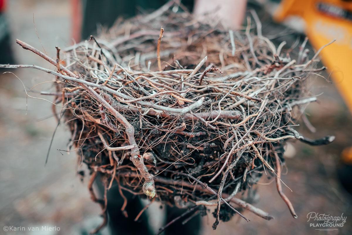 bokeh background, bokeh effect, bokeh photography | Photo:  Bird's Nest | © Karin van Mierlo, Photography Playground